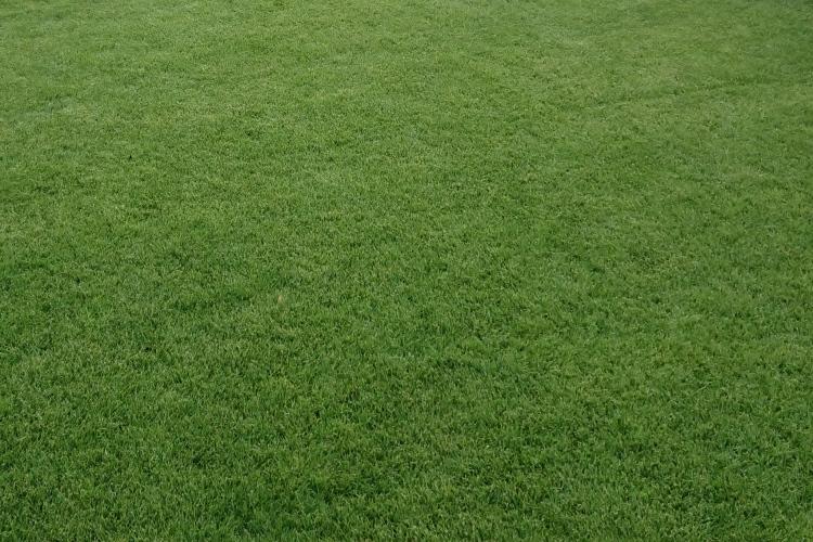 (c) Grashüpfer Rasen im Sommer