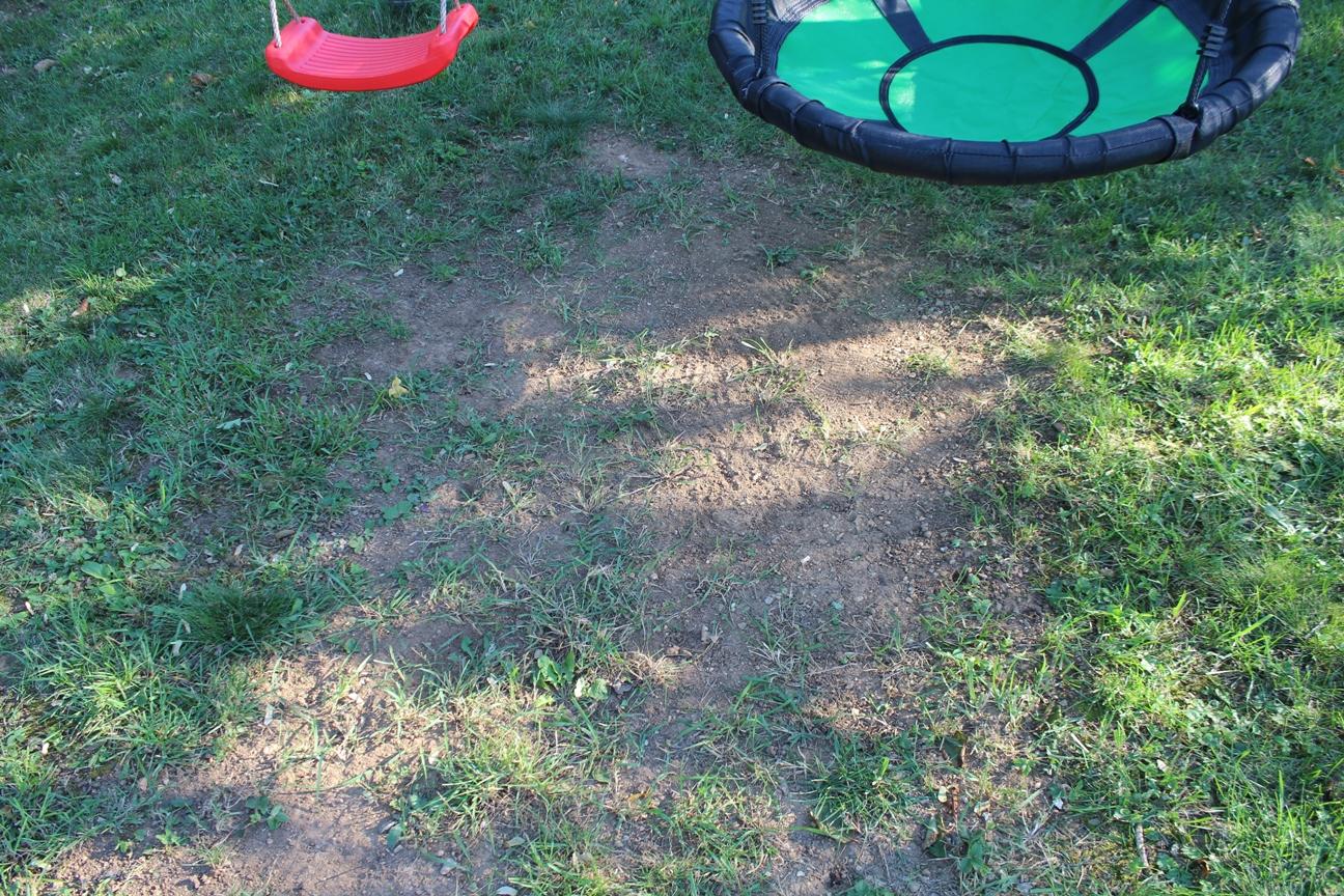 C Grashupfer Rasen Reparieren Grashupfer