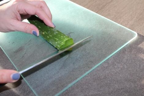 (c) Grashüpfer, Aloe Vera Blatt aufschneiden